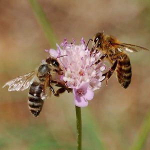 jardinons ensemble abeilles