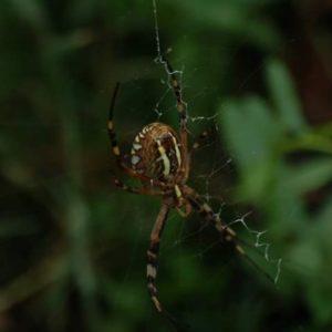 jardinons ensemble araignée