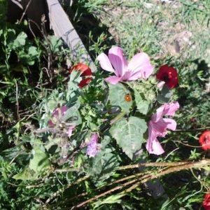 jardinons ensemble fleurs roses 3