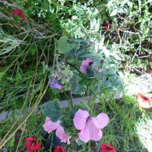 jardinons ensemble fleurs roses